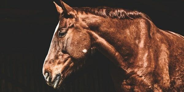 funkcje hal dla koni