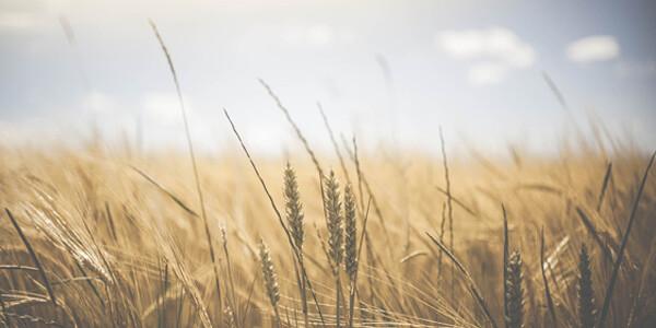 płody rolne