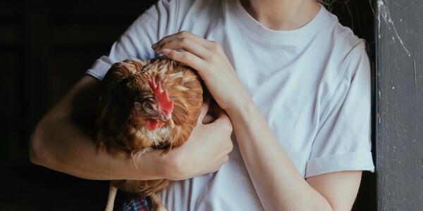 wymogi dot. dobrostanu zwierząt